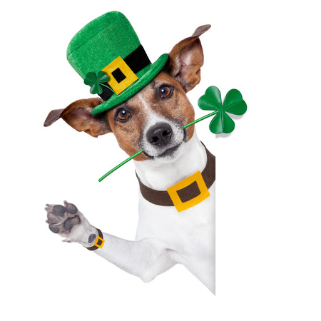 22666446 - st. patrick's day dog with a clover behind a banner